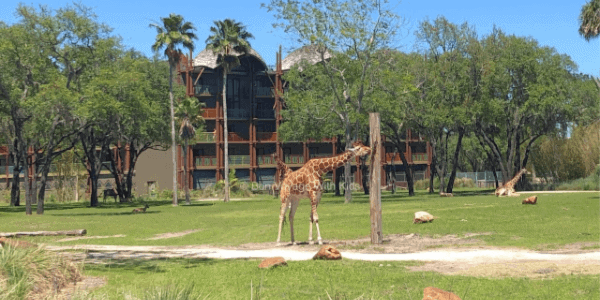 plan-a-disney-vacation-walt-disney-world-resort-disney-animal-kingdom-lodge-kidani-village