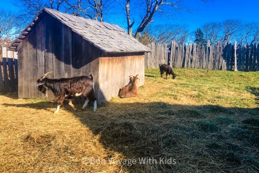 Nye Barn at Plimoth Plantation