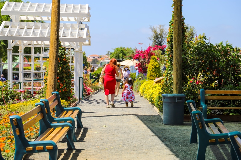 Carlsbad Flower Fields things to do in San Diego with kids