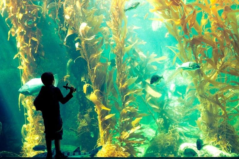 Birch Aquarium at Scripps San Diego