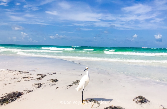 bird on Anna Maria Island