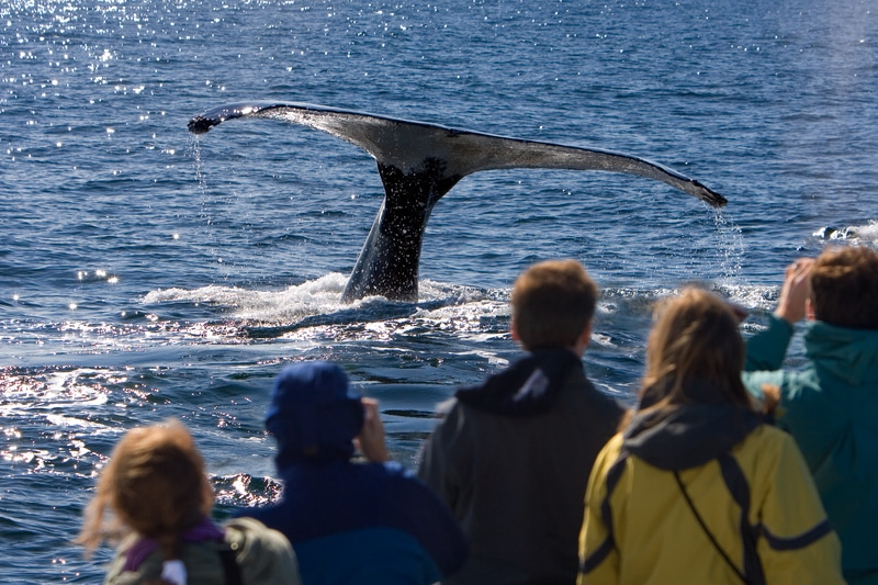 whale watching is one of the best things to do on Cape Cod with kids