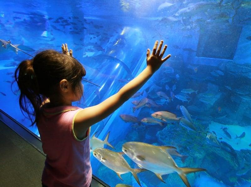 girl in aquarium Cape Cod Things To Do
