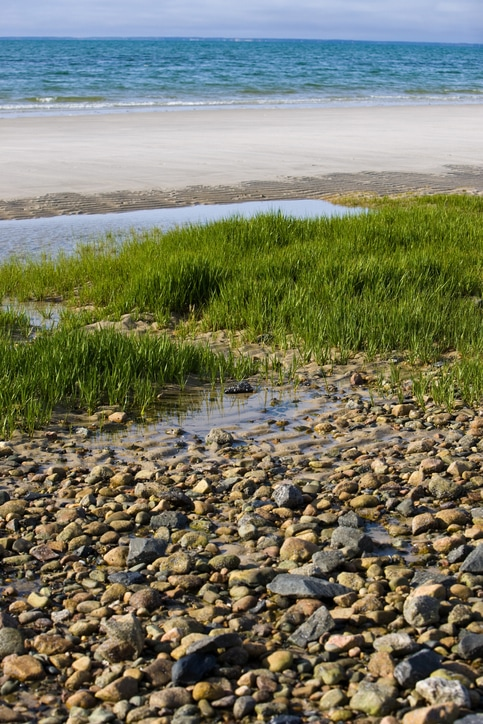tidal pool in the Brewster Flats in Brewster on Cape Cod