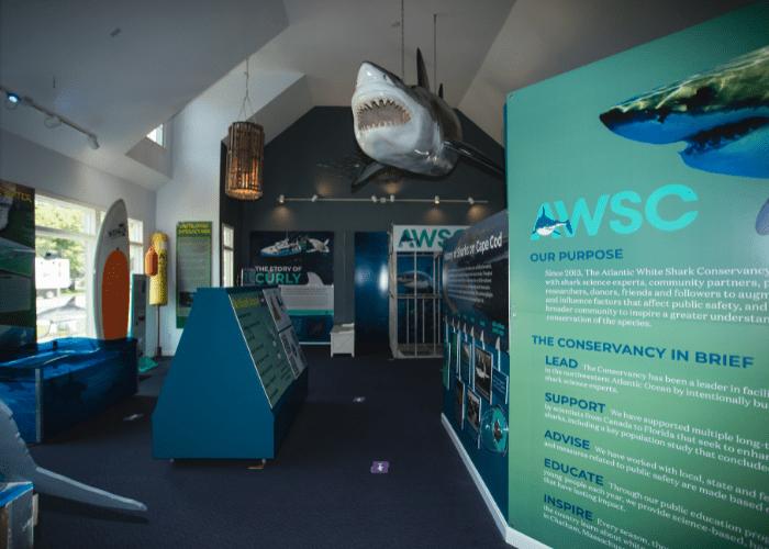 inside the atlantic white shark conservancy center